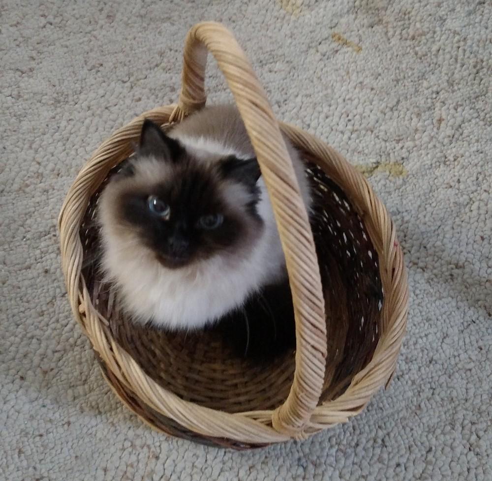 Click image for larger version.  Name:Basket.jpg Views:190 Size:270.1 KB ID:23728