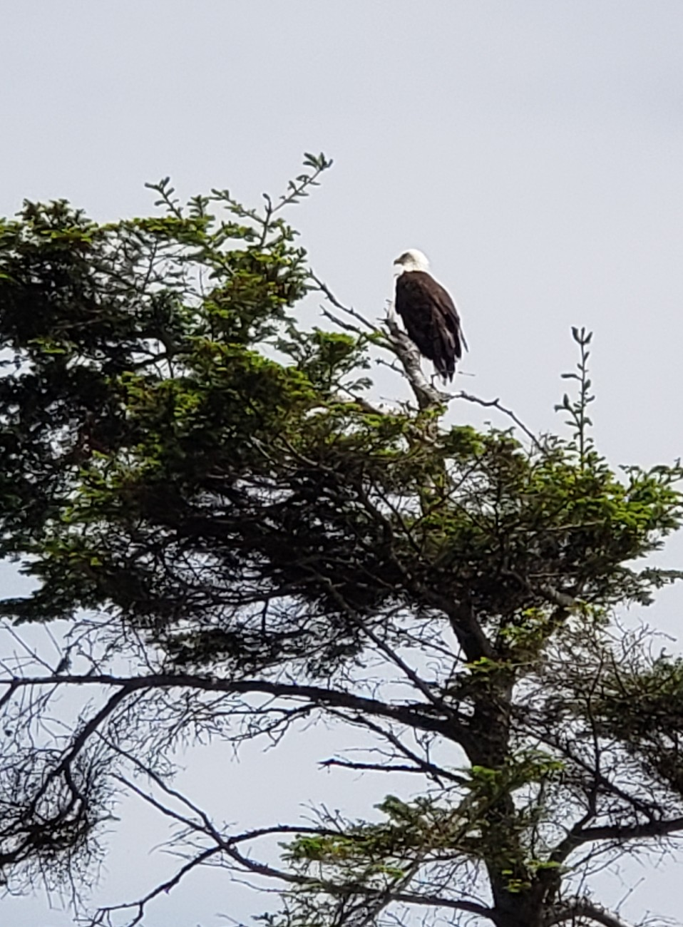 Click image for larger version.  Name:Eagle1.jpg Views:27 Size:291.1 KB ID:25273