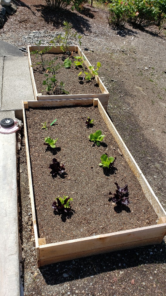 Click image for larger version.  Name:Garden.jpg Views:9 Size:348.4 KB ID:25333