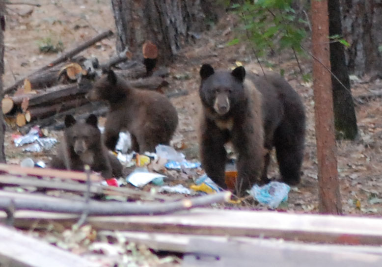 Click image for larger version.  Name:Bears 8Oct2020.jpg Views:18 Size:103.8 KB ID:25639