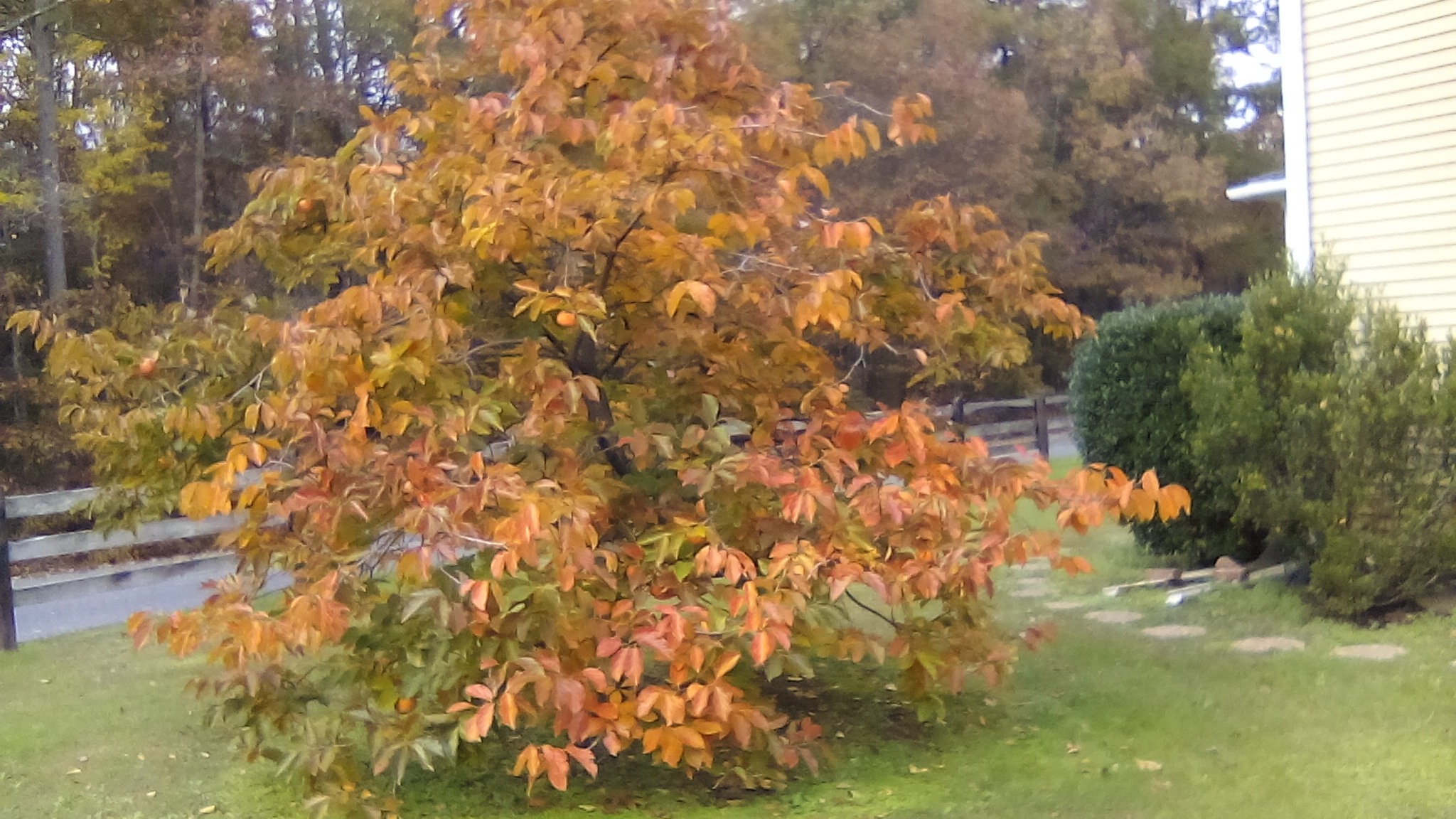 Click image for larger version.  Name:IMG_20201110_120901.jpg Views:8 Size:916.8 KB ID:25648