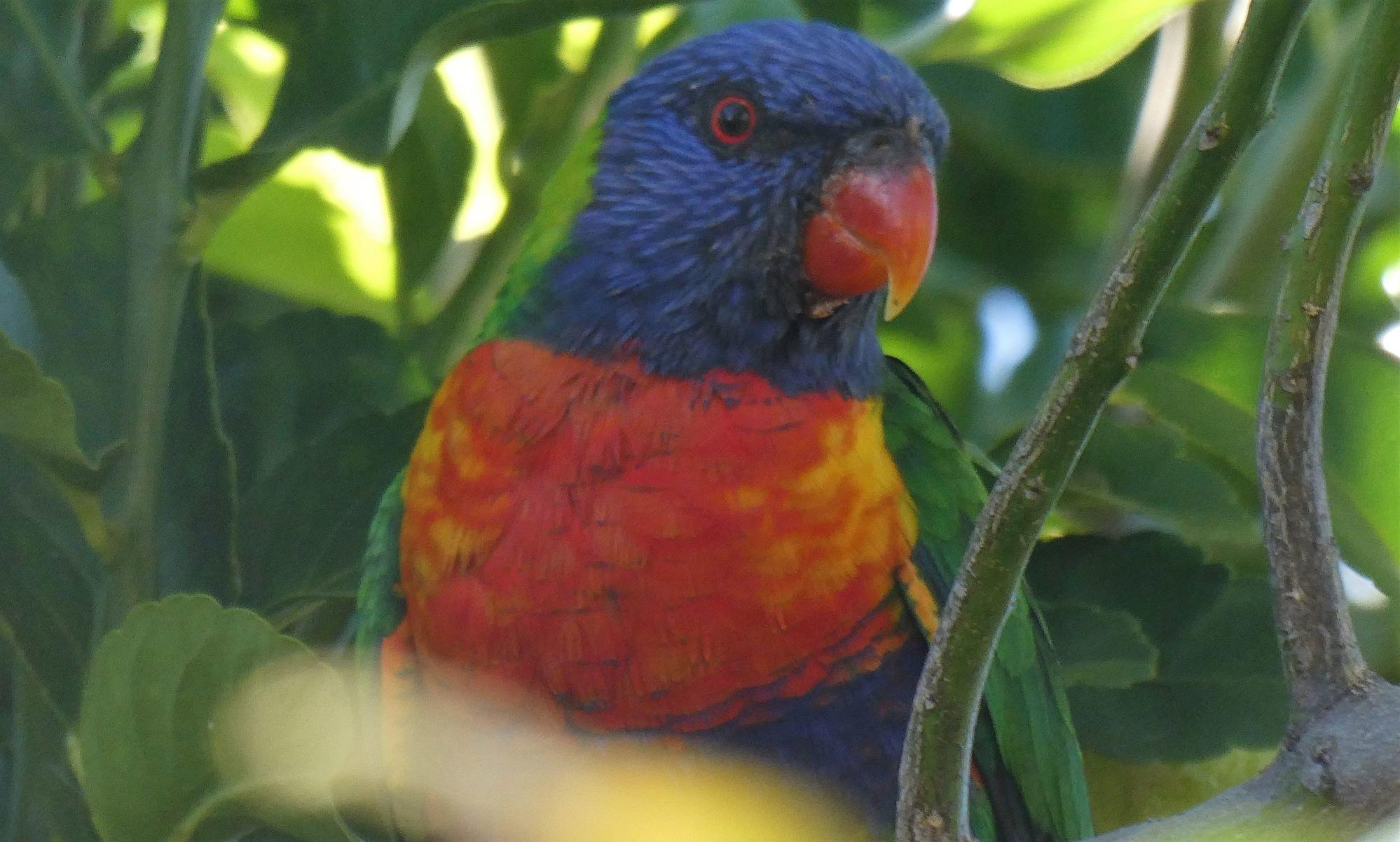 Click image for larger version.  Name:Bird1.jpg Views:7 Size:249.9 KB ID:25826