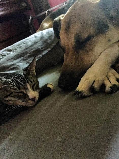 Click image for larger version.  Name:dog and cat.jpg Views:18 Size:94.4 KB ID:25955